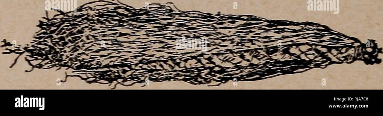 Rubber Strands Stock Photos & Rubber Strands Stock Images