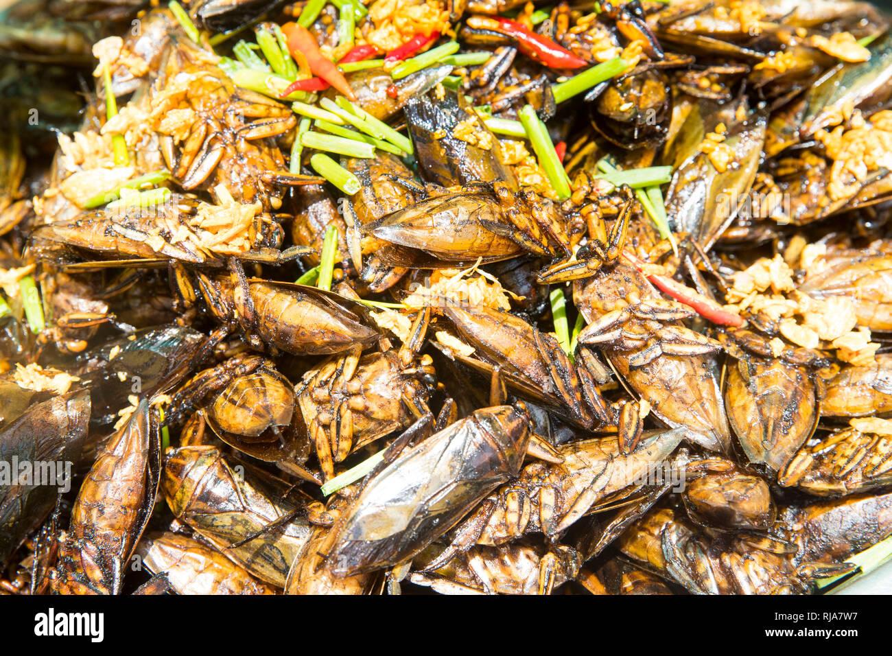 auf dem Weg nach Kampong Cham, geröstete Kakerlaken die wie Chips gegessen werden, überaus schmackhaft - Stock Image