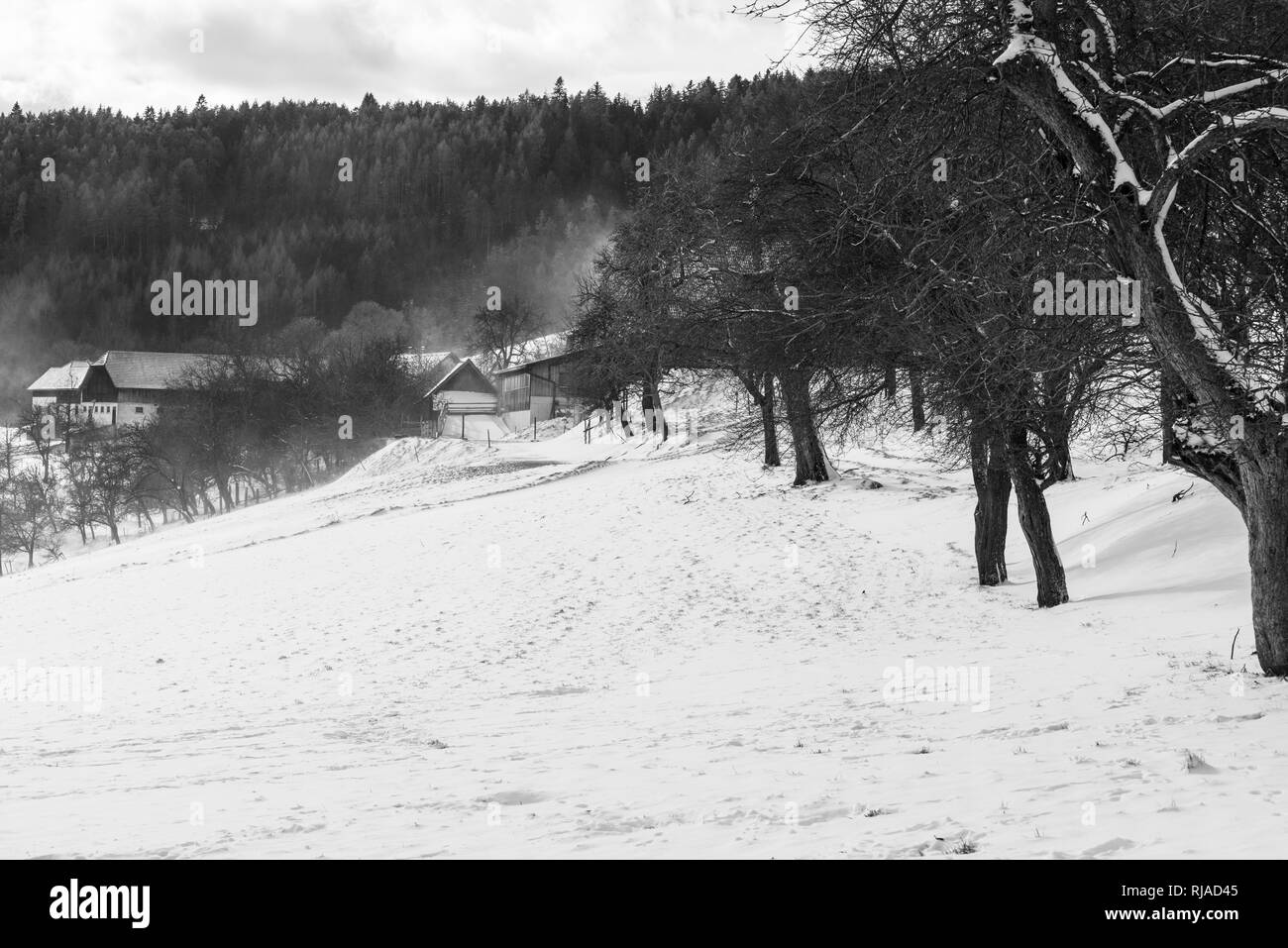 Monochrome rural snowy winter landscape with trees,field,farm,forest on a windy day with light snowfall - Stock Image