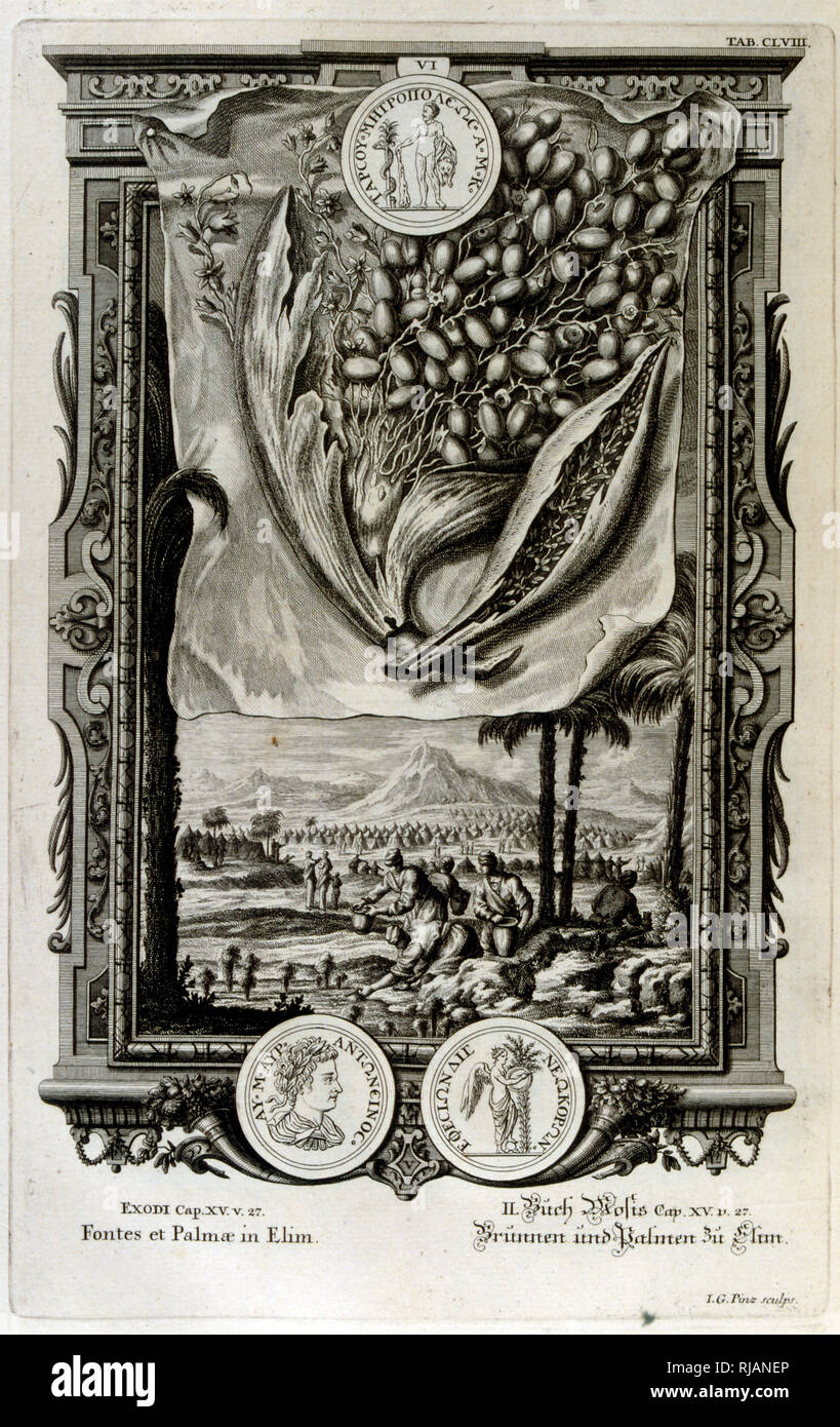Elim, according to the Hebrew Bible, was one of the places where the Israelites camped following their Exodus from Egypt. A place where 'there were twelve wells of water and seventy date palms.; From Physique sacree, ou Histoire-naturelle de la Bible, 1732-1737, by Johann Jakob Scheuchzer (1672 - 1733), a Swiss scholar born at Zurich - Stock Image