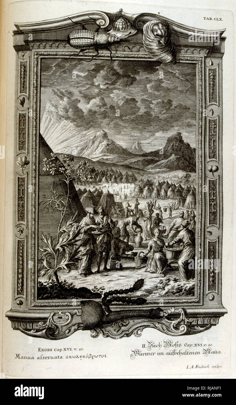 Collection of Manna, according to the Hebrew Bible, when the Israelites fled into Sinai, Exodus from Egypt. From Physique sacree, ou Histoire-naturelle de la Bible, 1732-1737, by Johann Jakob Scheuchzer (1672 - 1733), a Swiss scholar born at Zurich - Stock Image