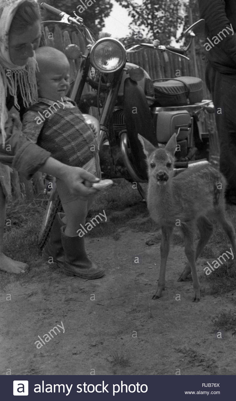The villagers are fedding with bread young roe deer, which seemed to be posing for my photography. People found an animal in the woods. Its mother was killed by hunters. Roe deer lived in rural family almost all summer. Roe deer was not afraid of people because it felt their kindness. - Stock Image