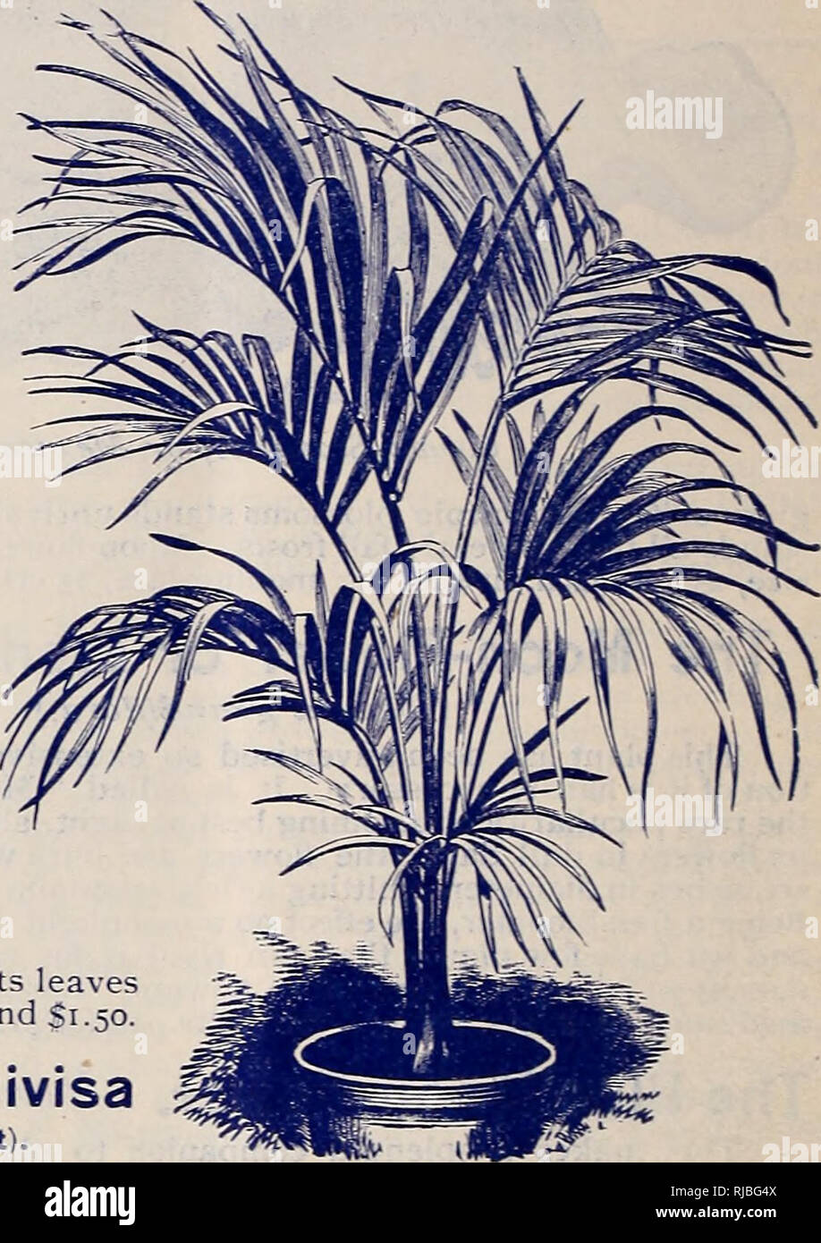 Chaapel's flowers, plants, and seeds  Flowers Catalogs