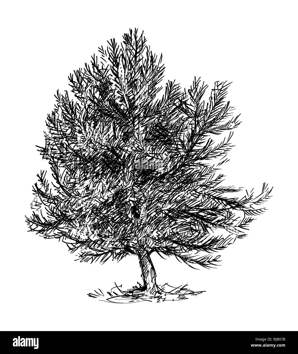 Cartoon Drawing of Small Pine Conifer Tree - Stock Image