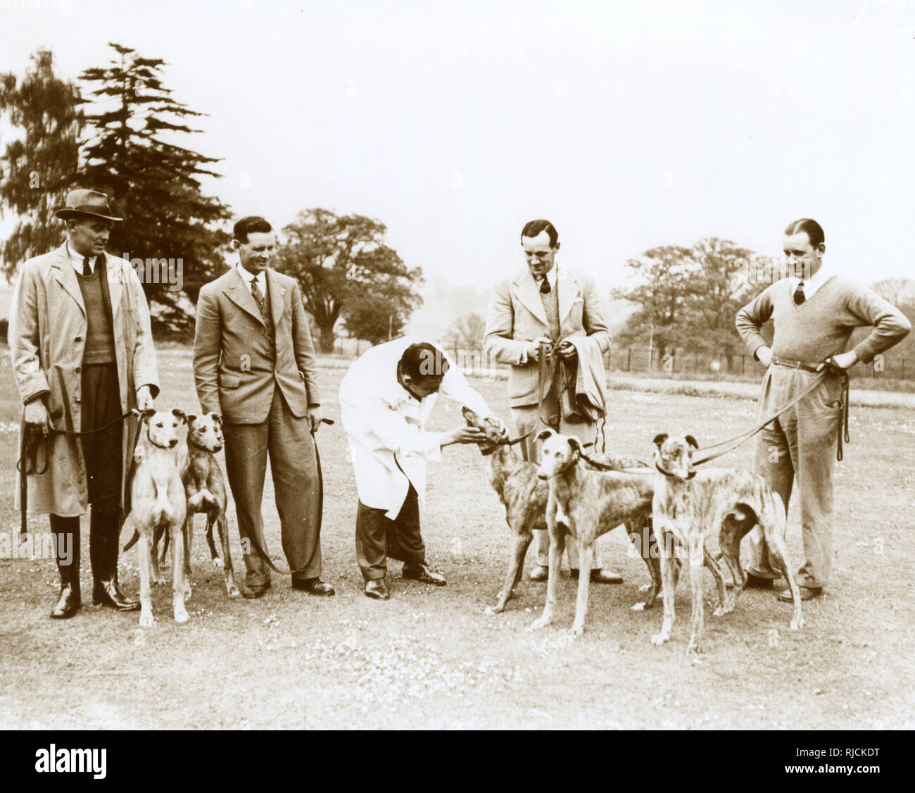 Greyhound Derby entries being inspected by a vet at Northaw, Hertfordshire. - Stock Image