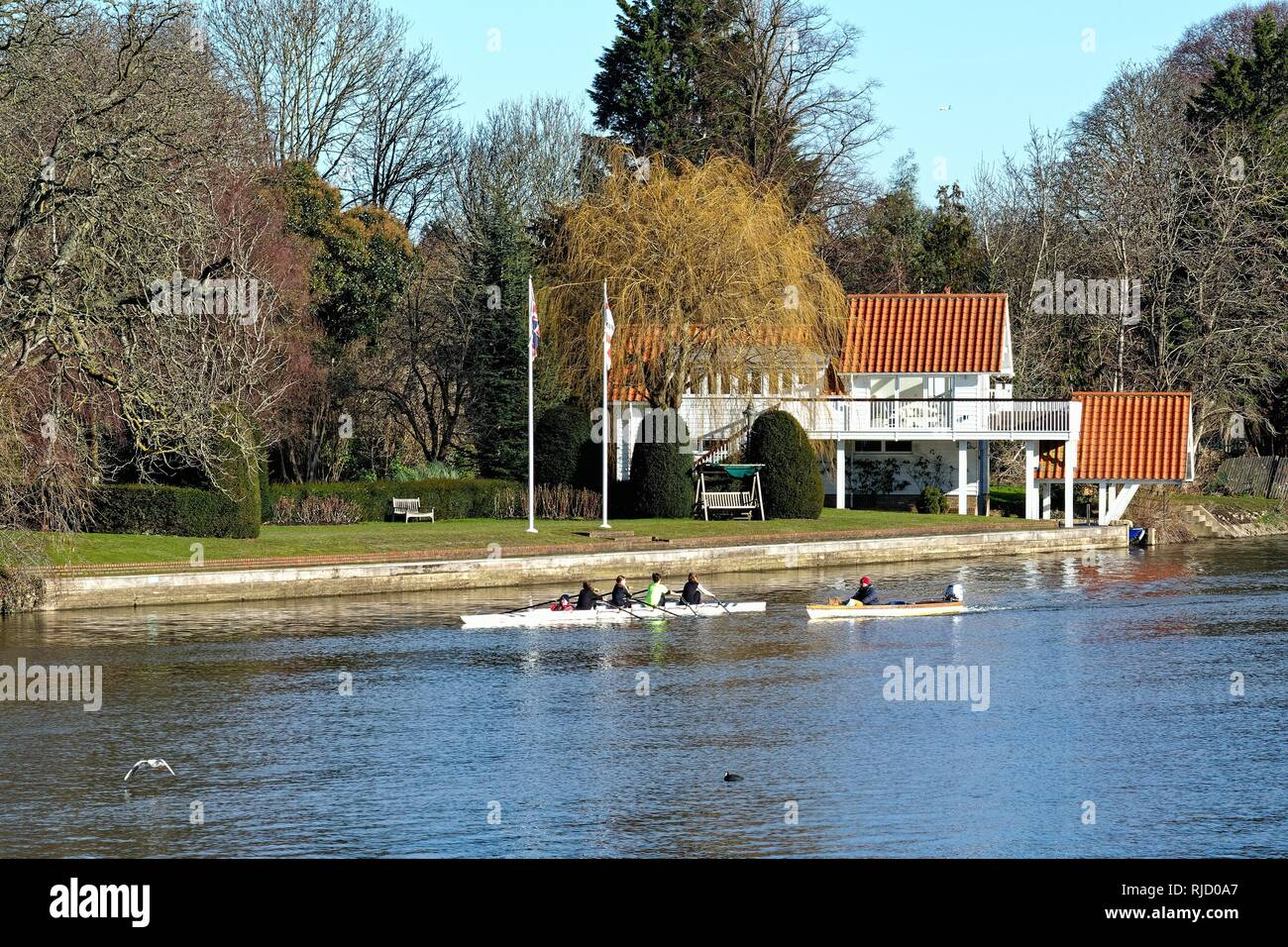 A coxed four boat rowing practising on the River Thames on a sunny winters day at Sunbury Surrey England UK - Stock Image