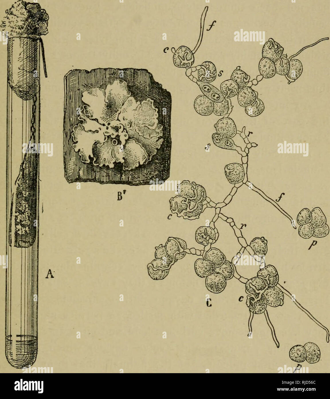 Chapters in modern botany  Plants