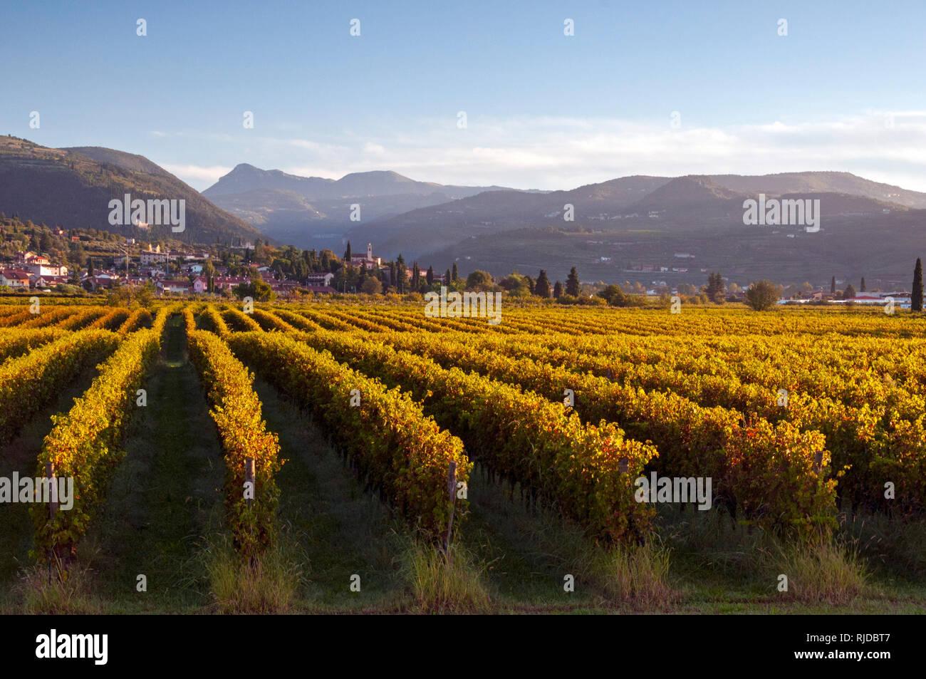 Sunrise view across vineyards from Dimora del Bugiardo, near San Pietro in Cariano, Italy Stock Photo