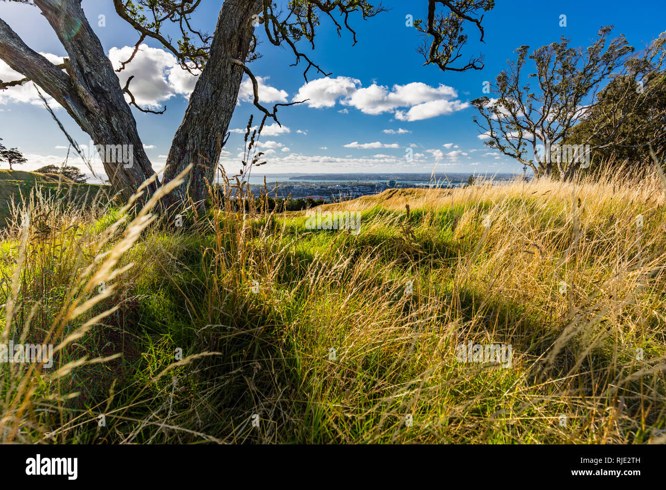 Mt. Eden Volcanic Cones and View to Auckland City, New Zealand - Stock Image