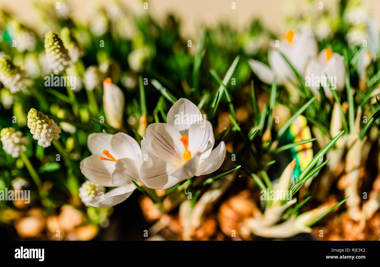 Flower macro shot, abstract photo of a flower. Beautiful background. - Stock Image