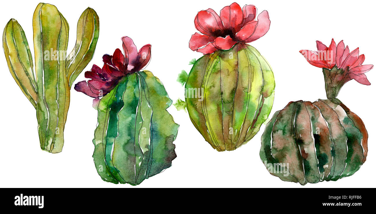 Green cactus floral botanical flower wild spring leaf wildflower isolated watercolor background illustration set watercolour drawing fashion aquare