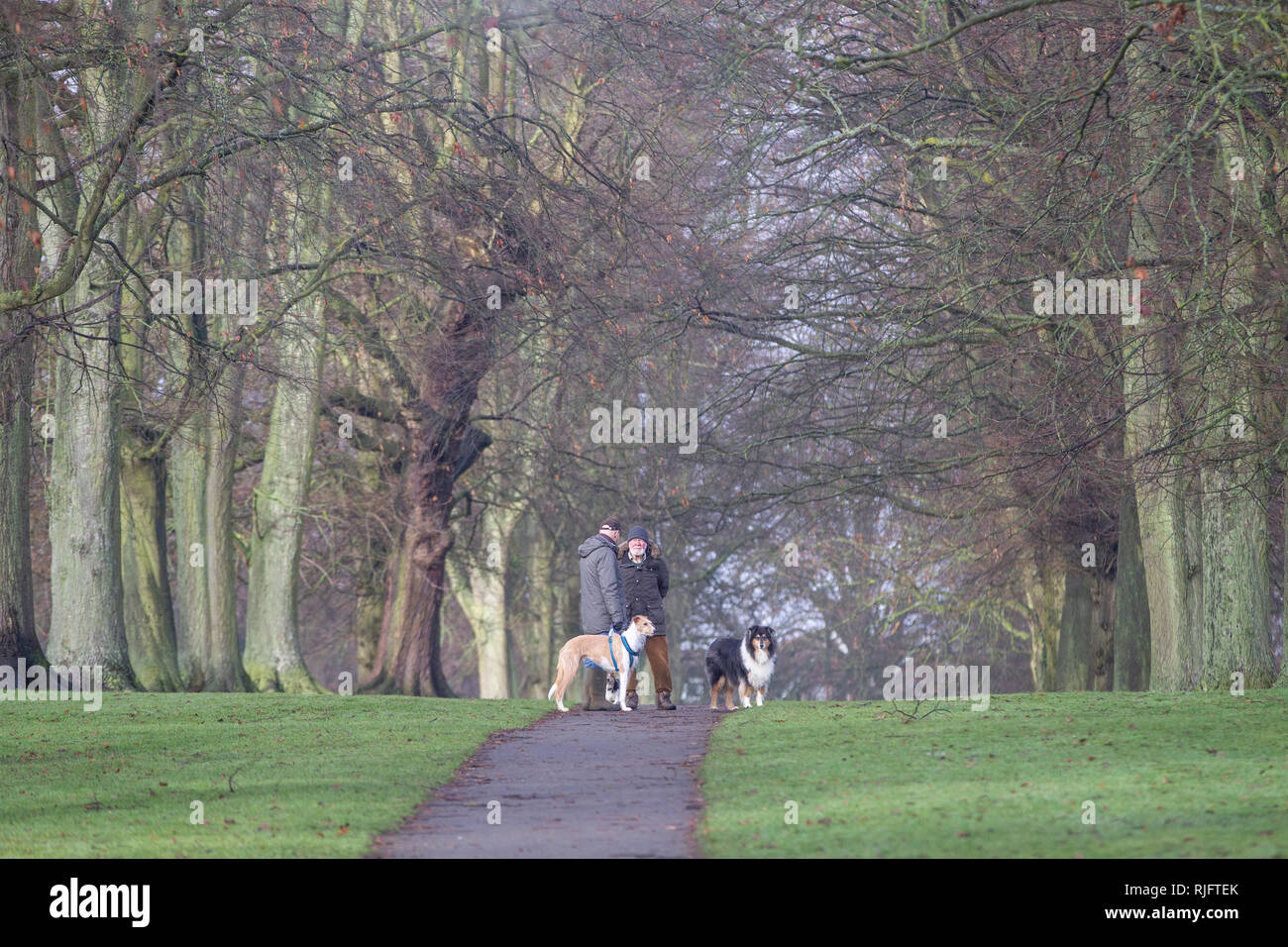 Northampton. U.K. 6th February 2019. Abington Park. Two men out walking their dogs after the mist had cleared, standing having a chat  in the avenue of trees while the dogs stand waiting patiently. Credit: Keith J Smith./Alamy Live News - Stock Image