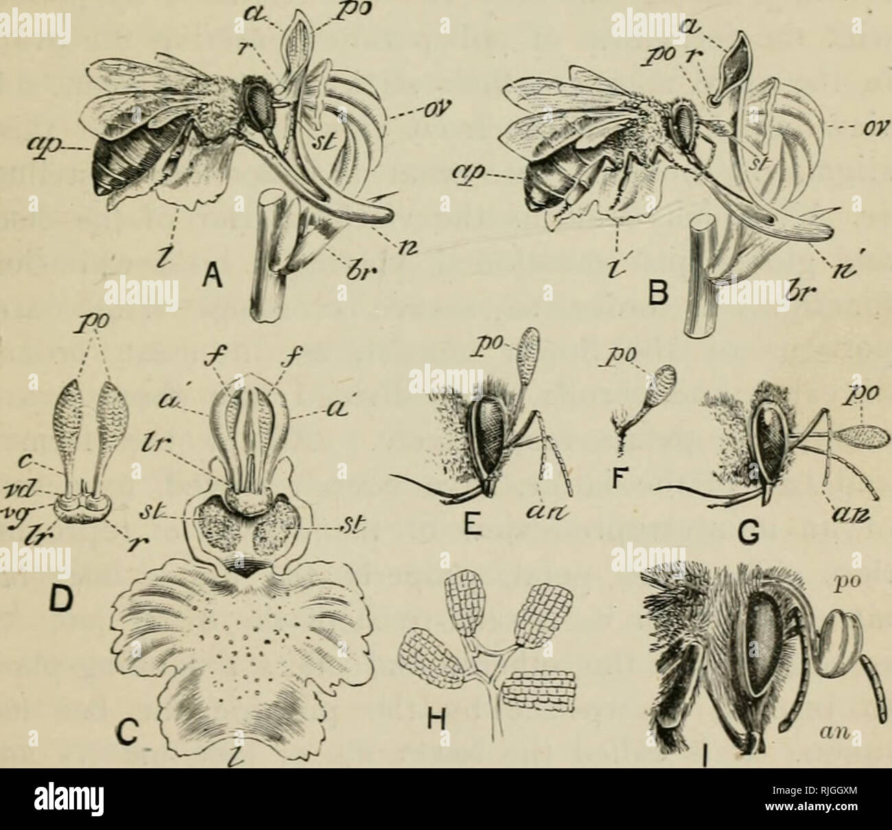 Orchid Anatomy Stock Photos Orchid Anatomy Stock Images Alamy