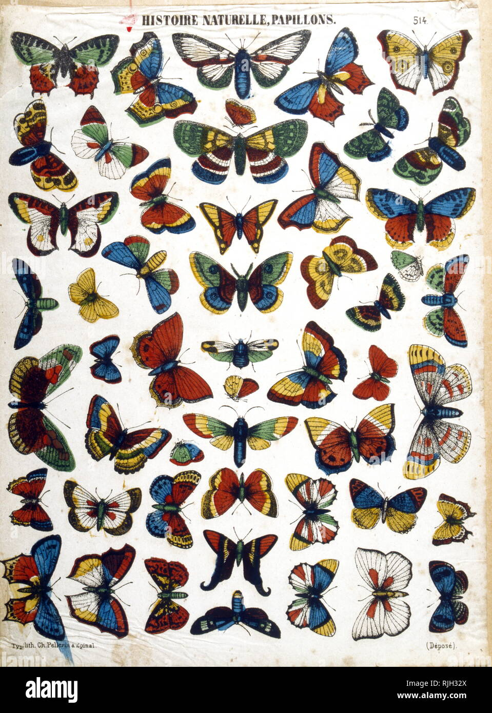 Butterflies; illustration of different species by 'Epinal images created by Imagerie Pellerin; France 1860. Jean-Charles Pellerin (1756-1836); French draftsman, illustrator and printer. He is famous for the images of epinal which he composed since the Revolution and which he printed himself from 1800. Succeeding his father, he took in 1773 the direction of the 'Factory of Pellerin' 3. From 1796, he expanded his activity and created the 'Imagerie Pellerin'. As early as 1800, he started a small business, a real imaginary industry, which later became known as Imagerie d'epinal. Charles Nicolas Pe - Stock Image