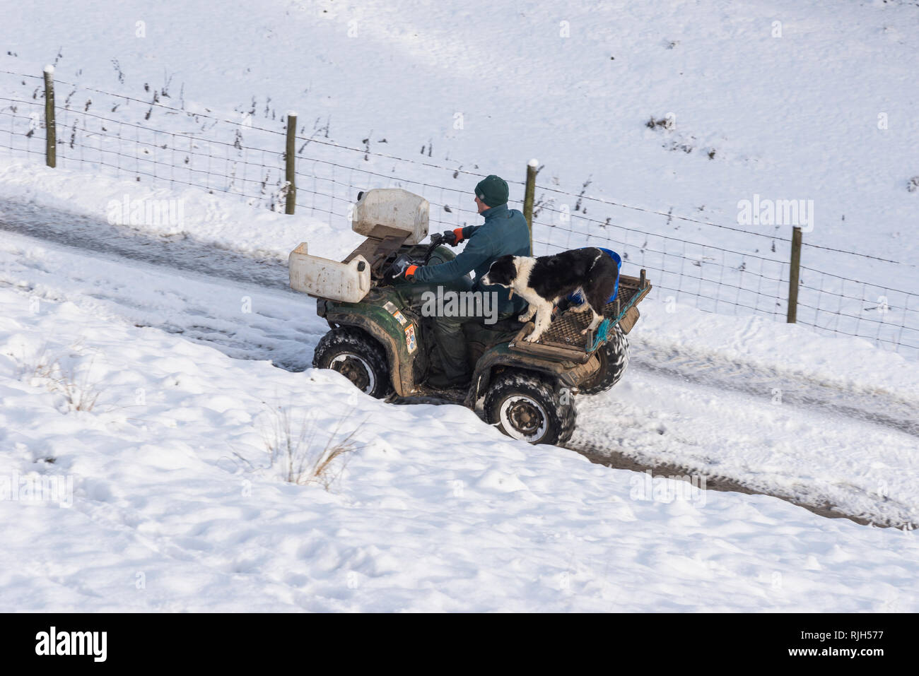 Farmer on a quad bike with his Border Collie dog on a snowy