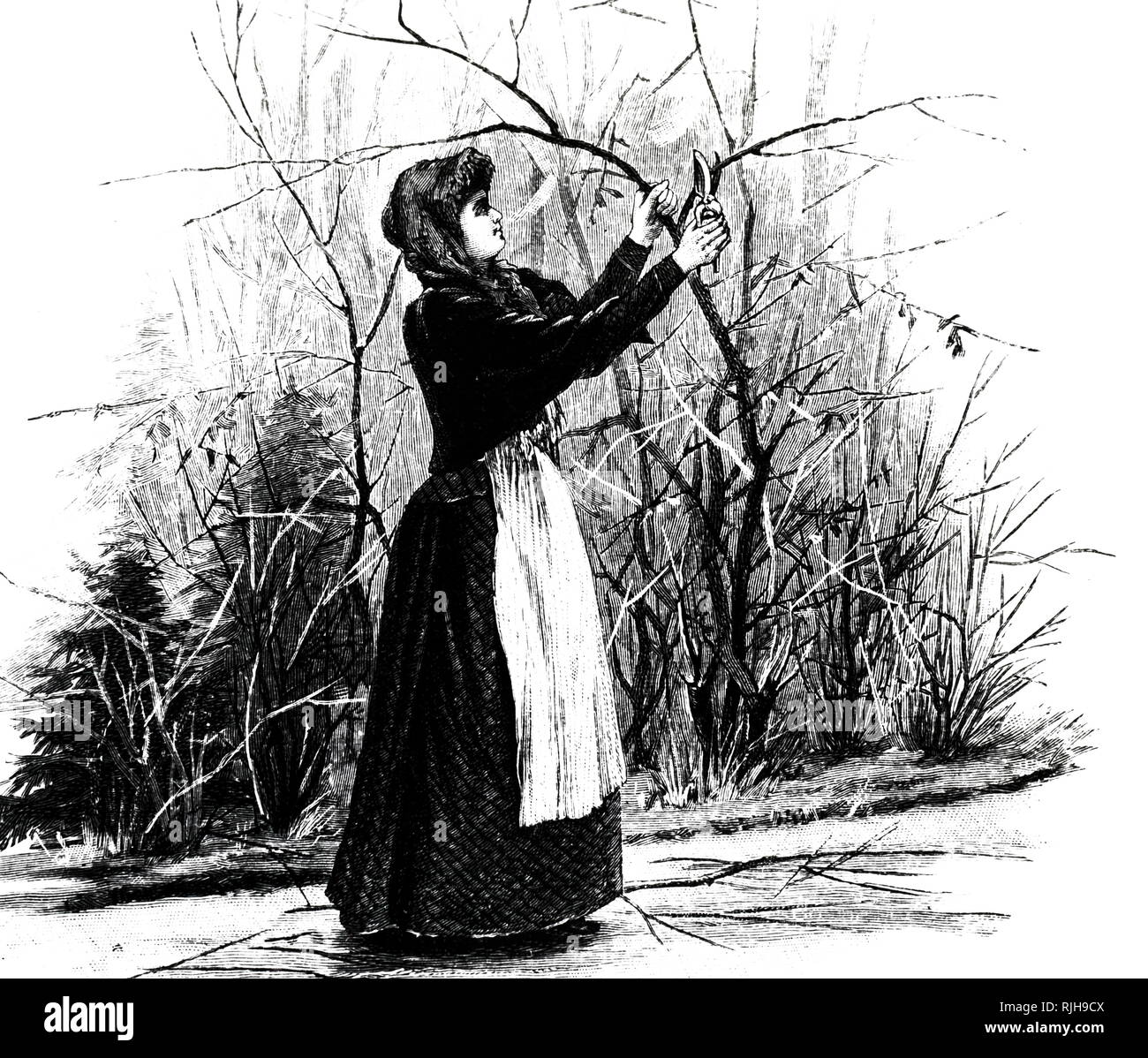 An engraving depicting a female gardener pruning. At this date, establishments were being set up in France, Germany and Britain to give women sound training which would enable them to earn a living as market gardeners or as gardeners in private employment. Dated 19th century - Stock Image