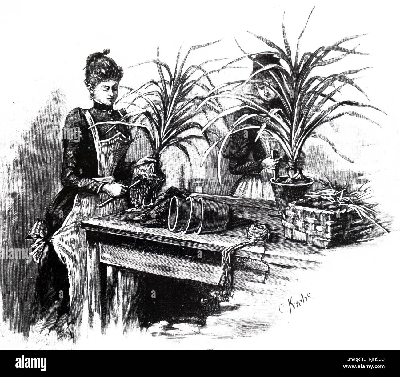 An engraving depicting a female gardener re-potting. At this date, establishments were being set up in France, Germany and Britain to give women sound training which would enable them to earn a living as market gardeners or as gardeners in private employment. Dated 19th century - Stock Image