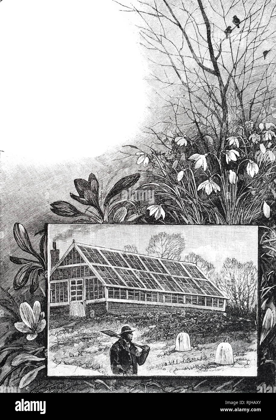 An engraving depicting a typical wood framed glass house and bell cloches in the foreground. Dated 19th century - Stock Image