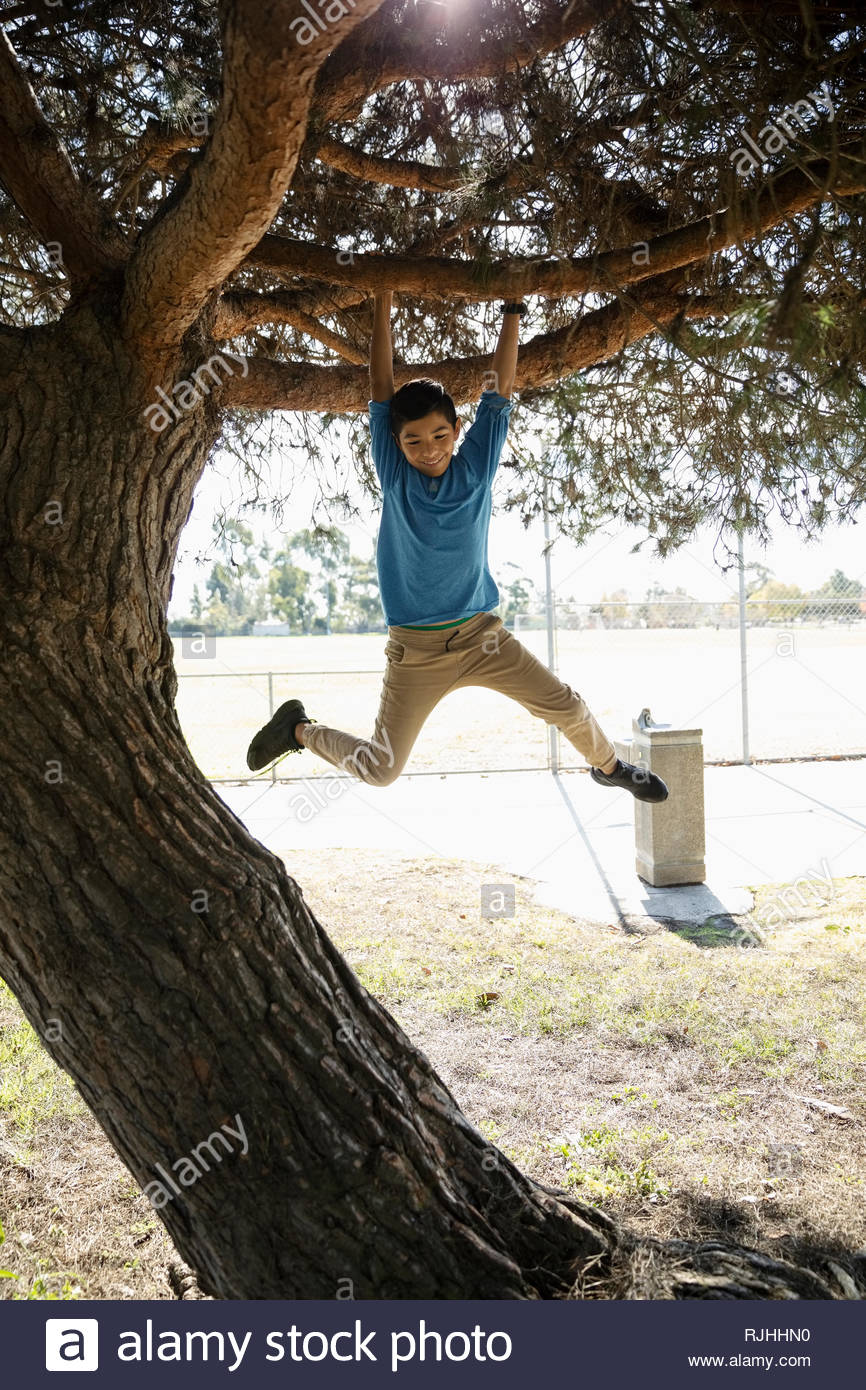 Playful boy hanging from tree in park - Stock Image