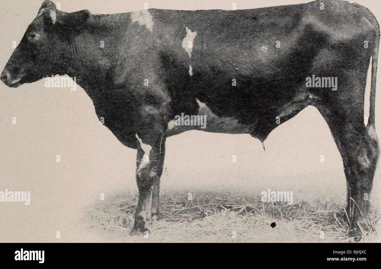 Beef production  Cattle  INFERIOR FEEDING CATTLE INFERIOR