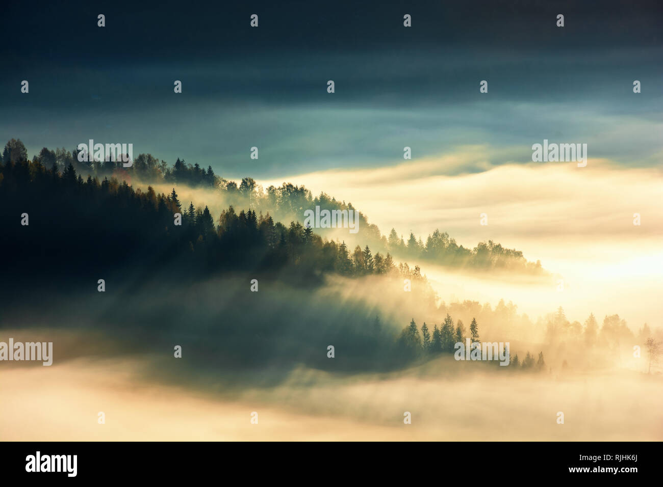forest island on the hill in the sea of fog. view from the top. gorgeous scenery at sunrise. wonderful nature background - Stock Image