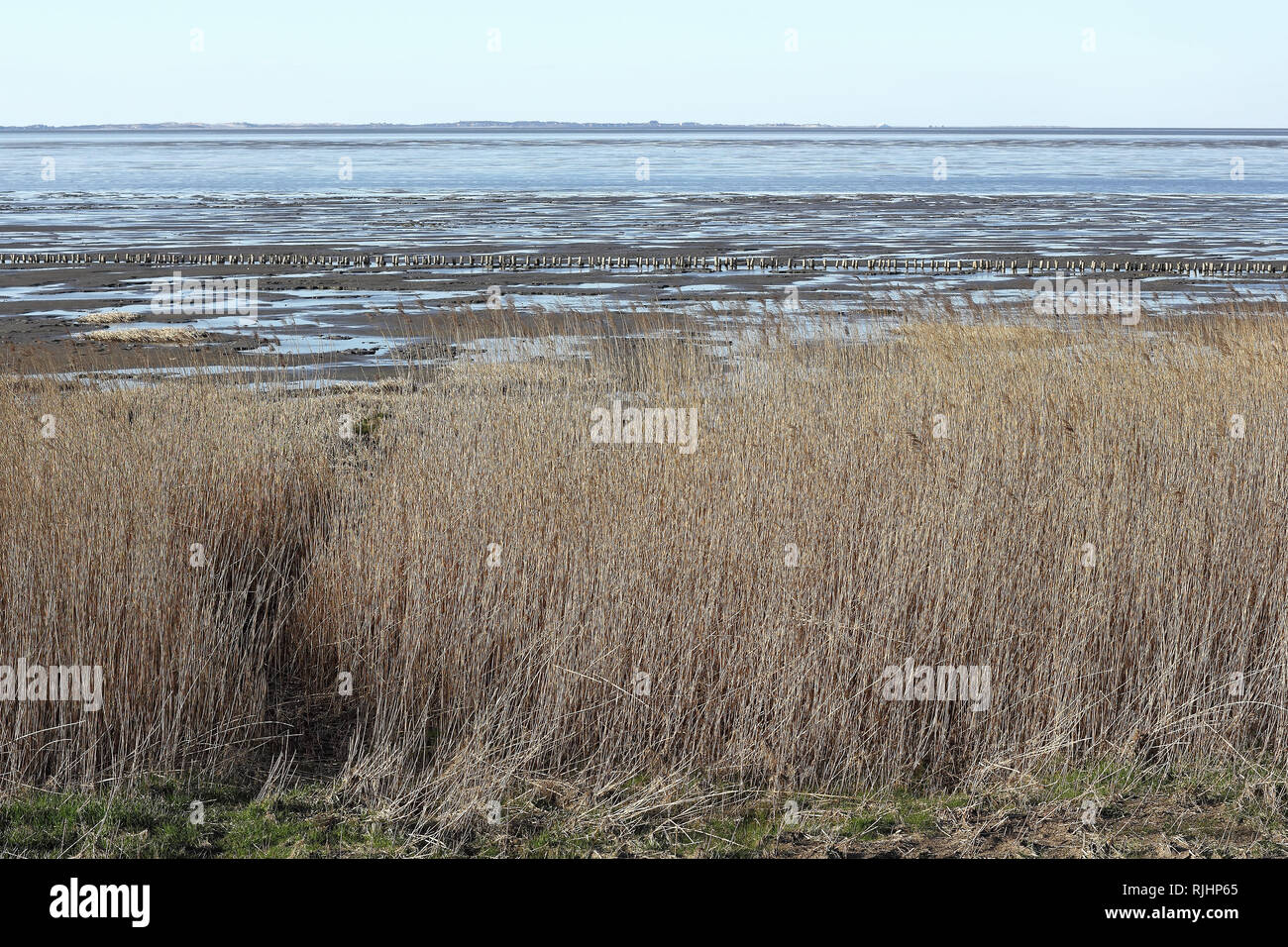 Riparian zone of tideland at the Island of Sylt - Stock Image