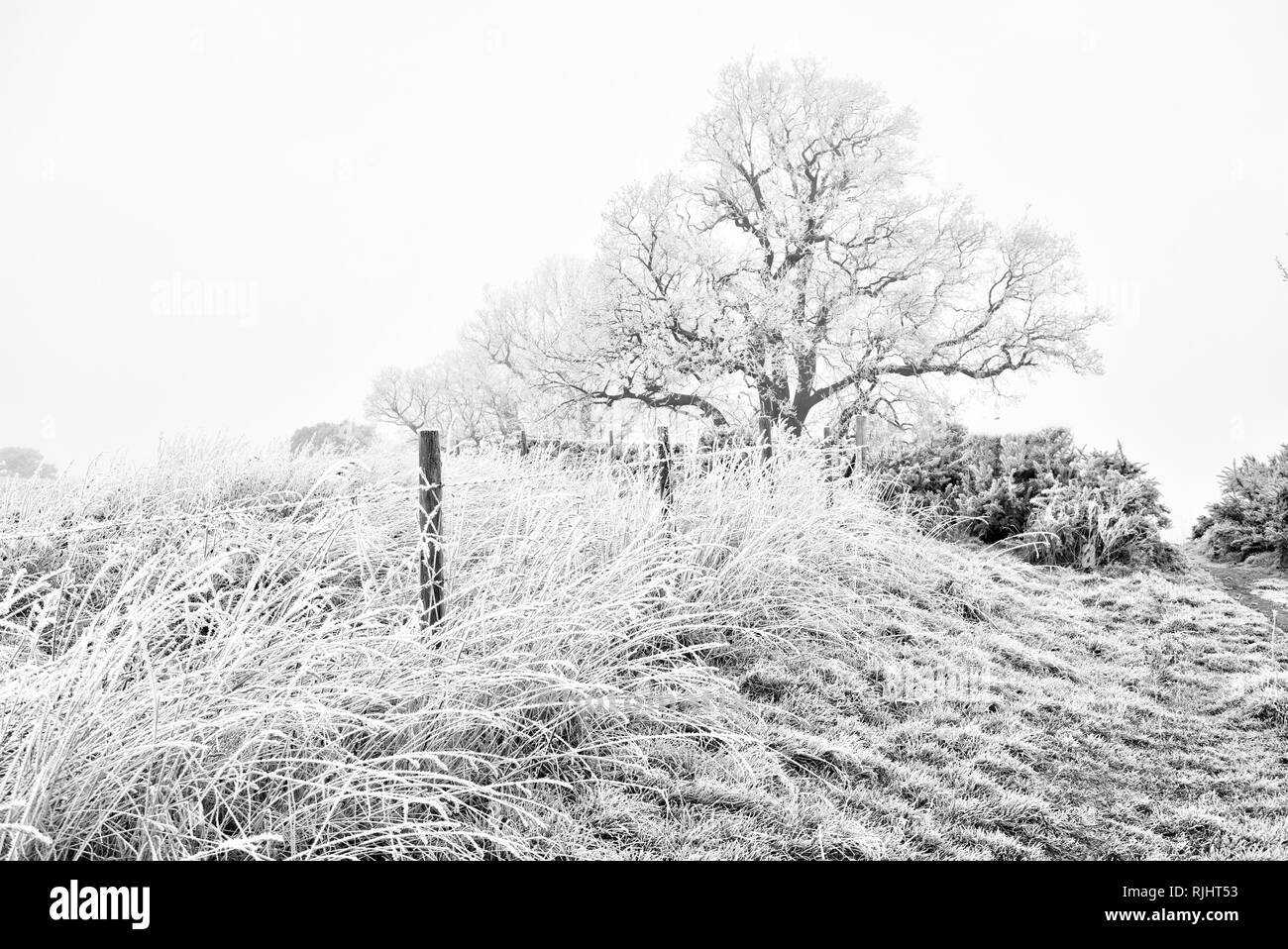 Frost covered barbed wire fence - Stock Image