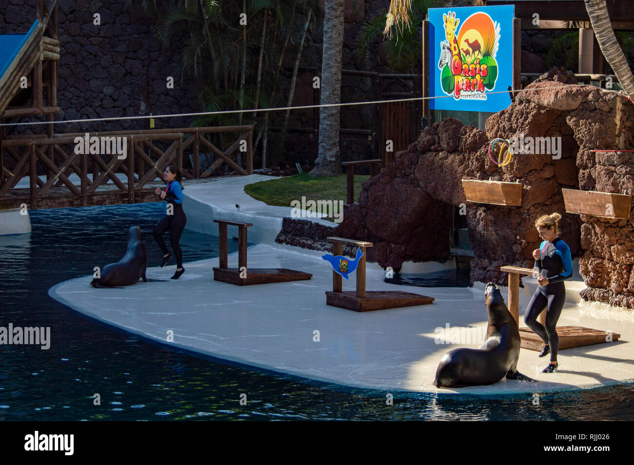 A sea lion show at the Oasis Park in Fuerteventura, Canary Islands Stock Photo