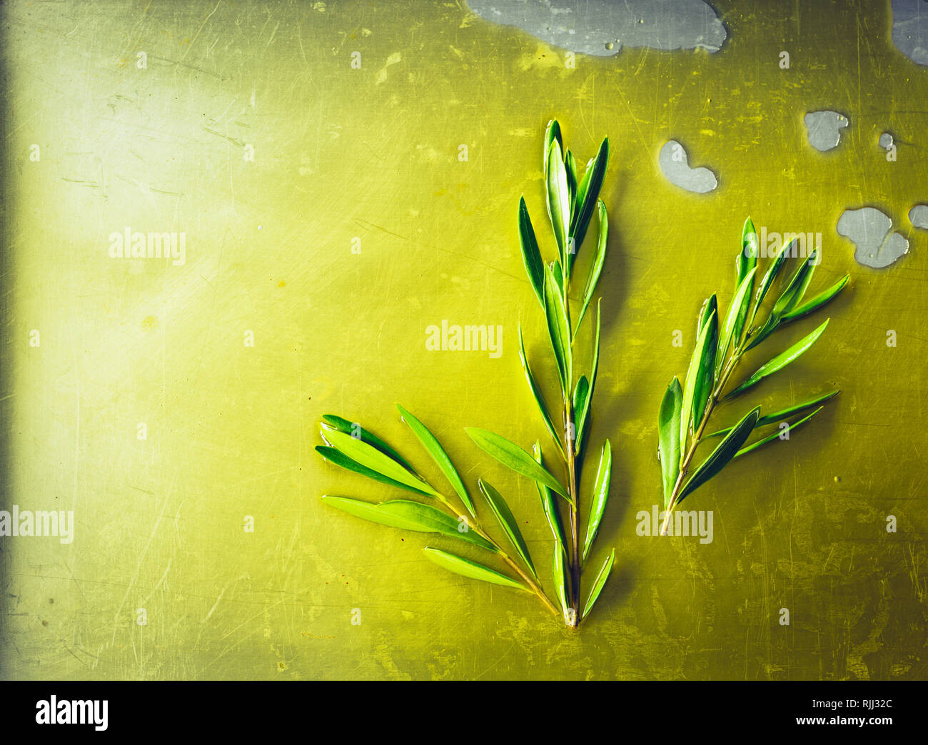 Olive oil puddle with olive branch and twig on metal background - Stock Image