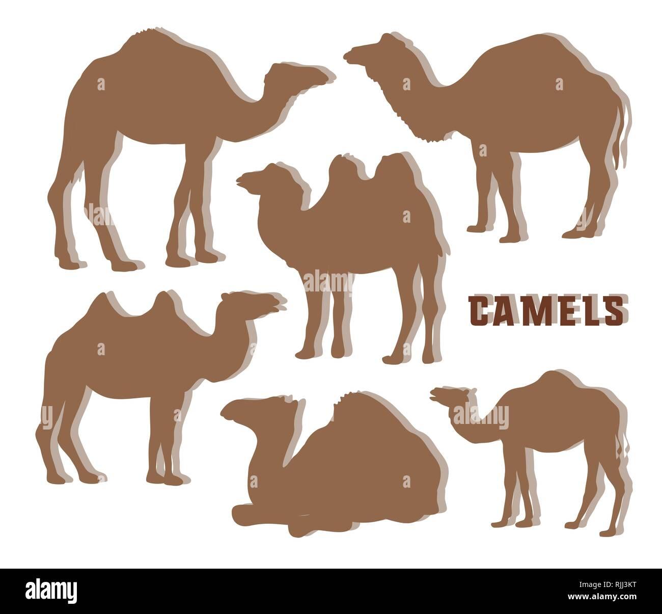 Camel Silhouettes set. Vector illustration EPS 10 - Stock Image