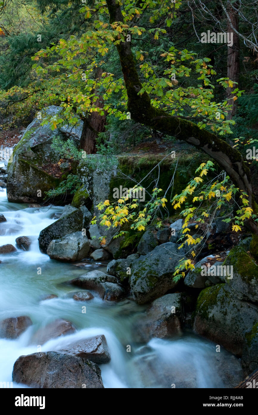 The swift waters of Tenaya Creek rush over boulders in Yosemite's Tenaya Canyon. - Stock Image