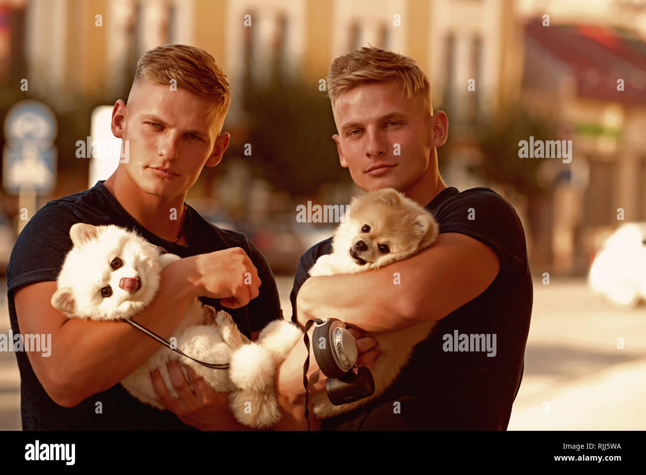 Always carrying about each other. Twins men hold pedigree dogs. Spitz dogs love the company of their family. Muscular men with dog pets. Happy twins - Stock Image