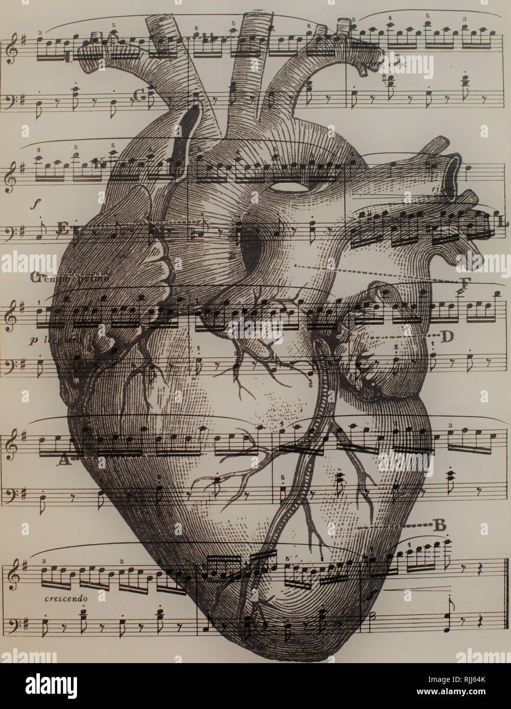 An anatomical heart combined with sheet music. - Stock Image