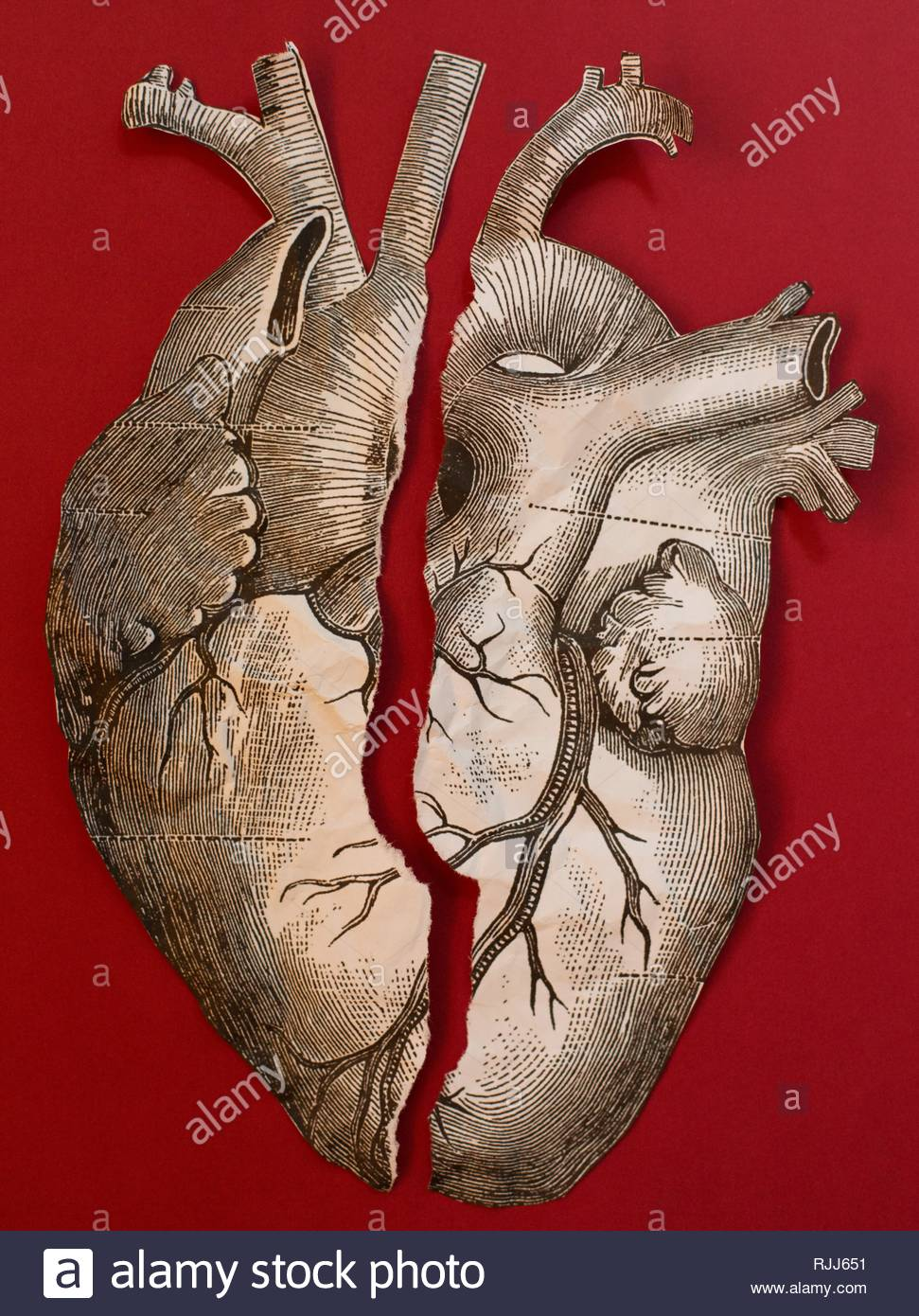 A vintage style anatomical heart illustration, crumpled and torn. - Stock Image