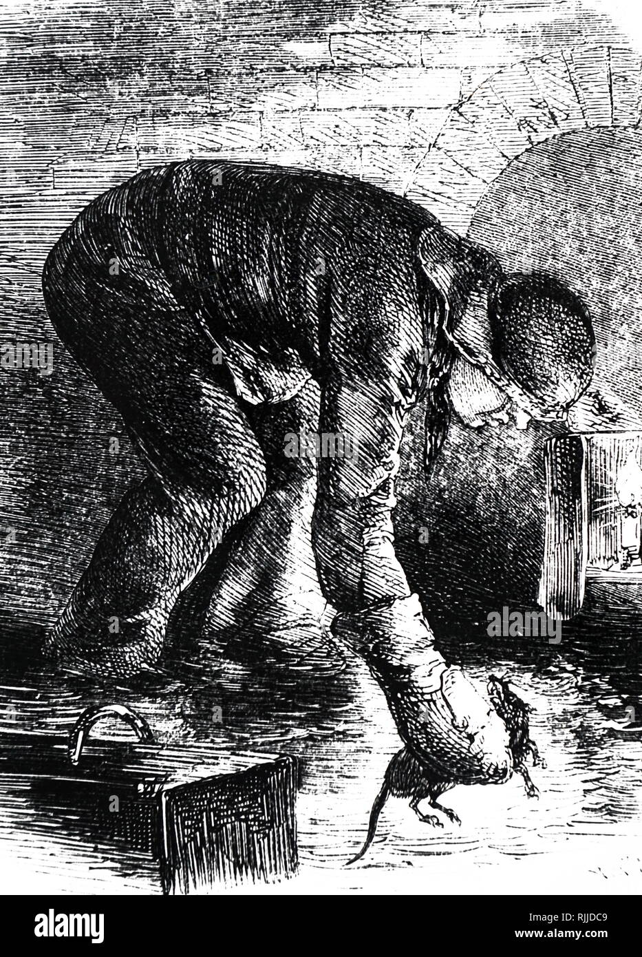 An engraving depicting a ratcatcher in a London sewer. One of the serious hazards of anyone working anywhere infested with rats is Weil's Disease. Dated 19th century - Stock Image