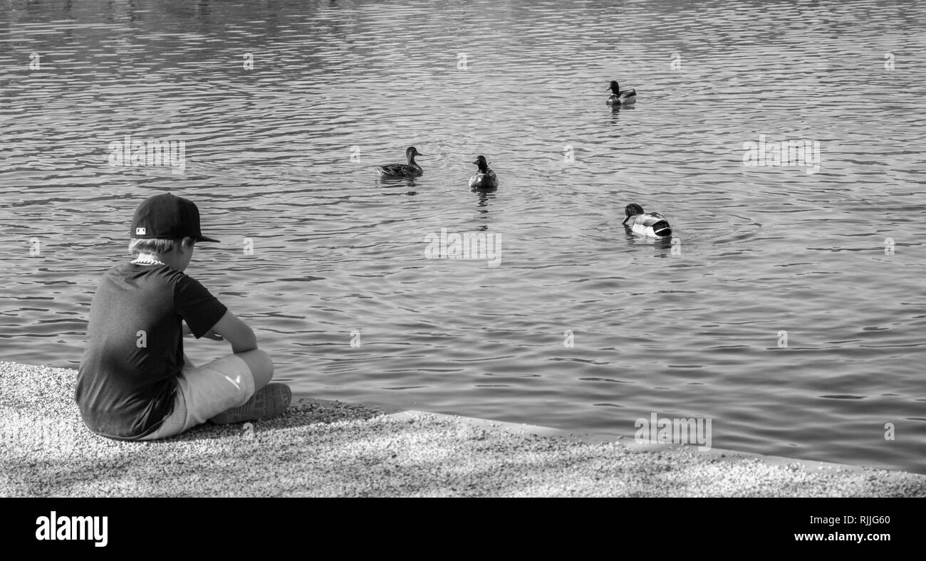 A boy reflecting on the edge of a pond while feeding the ducks. - Stock Image
