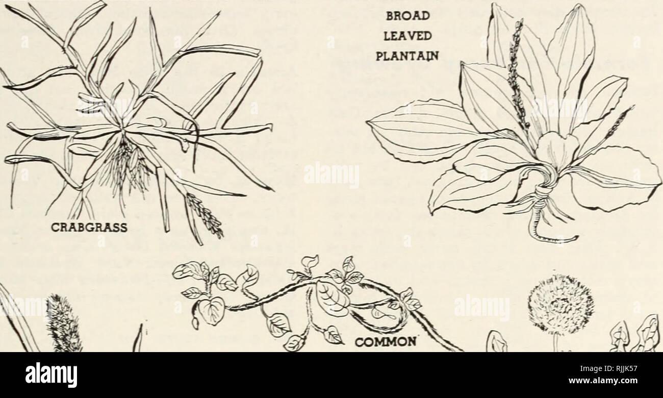 . Beckert's garden annual : complete garden guide for 1950. Nurseries (Horticulture) Pennsylvania Pittsburgh Catalogs; Nursery stock Pennsylvania Pittsburgh ...
