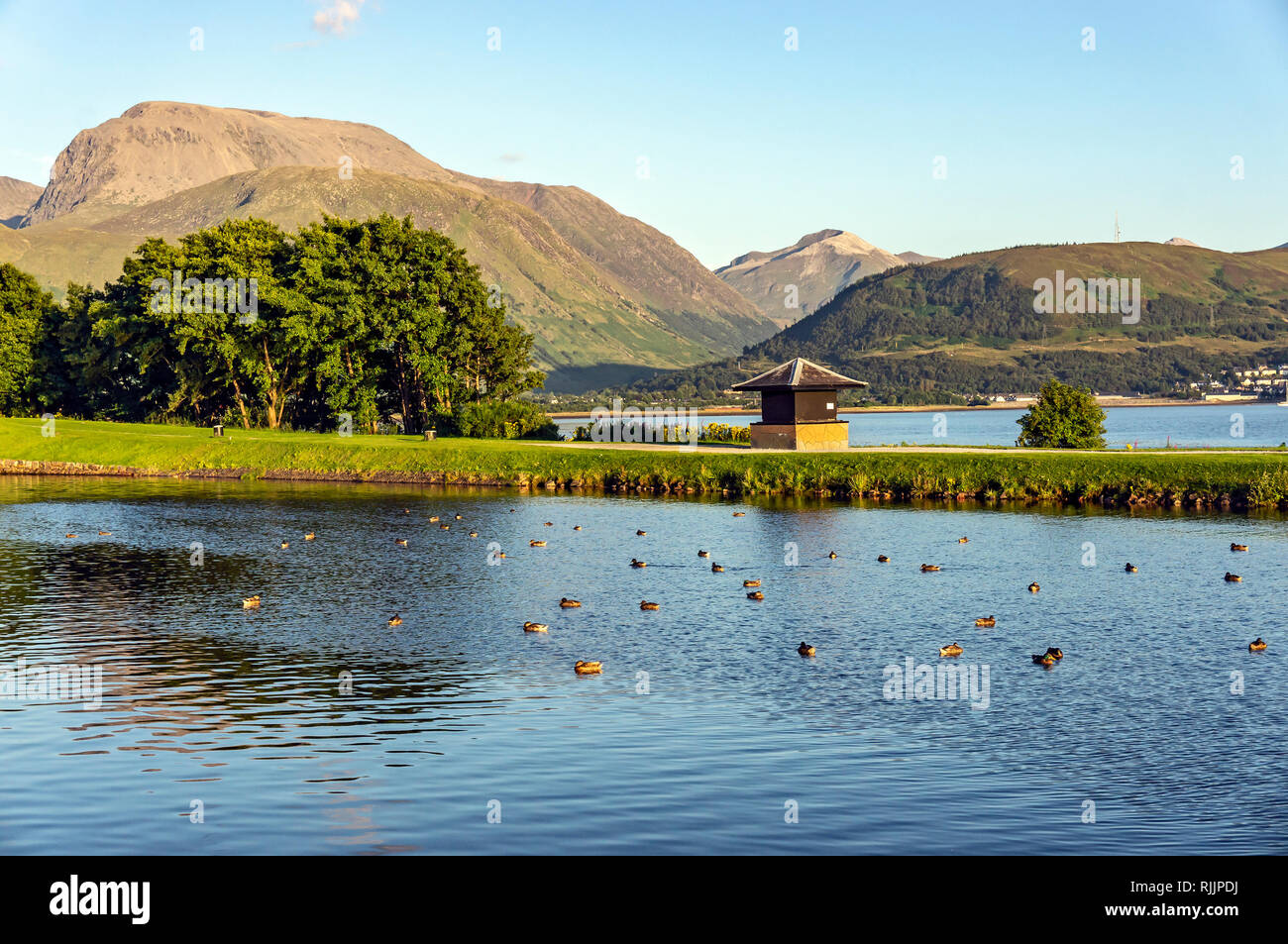 View of Scotland's highest mountain Ben Nevis from Corpach near Fort William Highland Scotland UK with ducks in Caledonian Canal basin Stock Photo