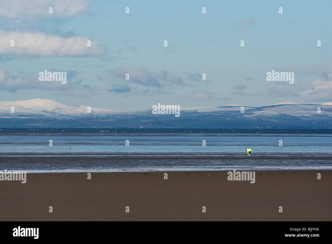 Man in High vis Jacket, digging for Lugworms in the vast expanse of Morecambe Bay, with snow capped hills in Background. - Stock Image