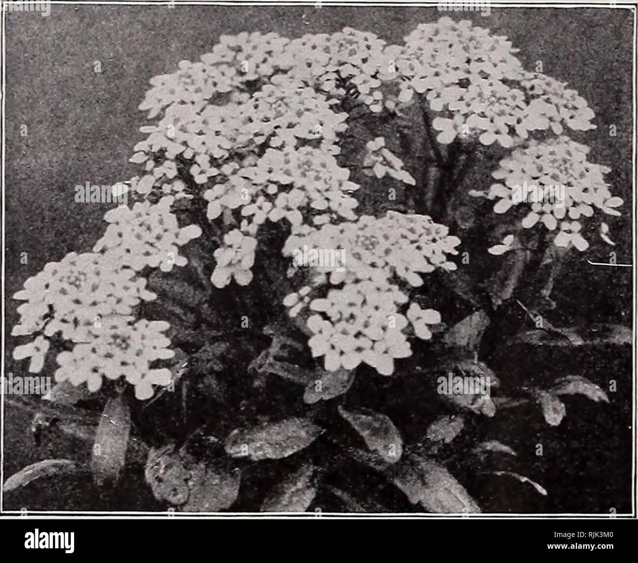 beckert's seeds : garden flower and lawn. commercial catalogs seeds