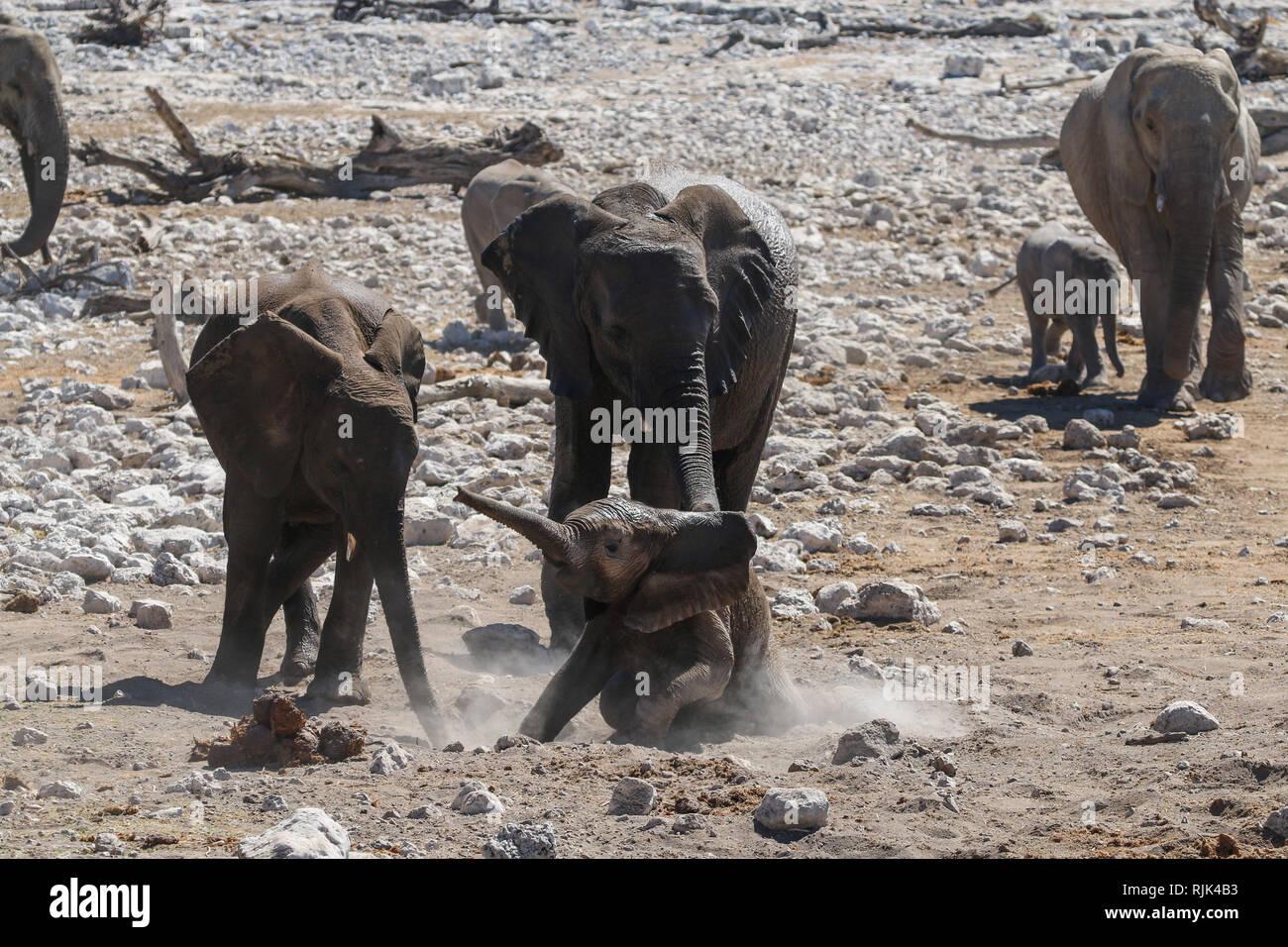 Elefanten im Etosha-Nationalpark Stock Photo