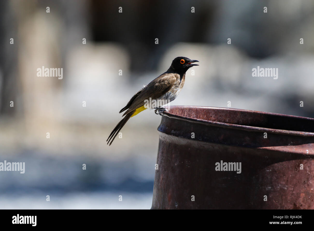 Vogel auf einer verrosteten Tonne Stock Photo