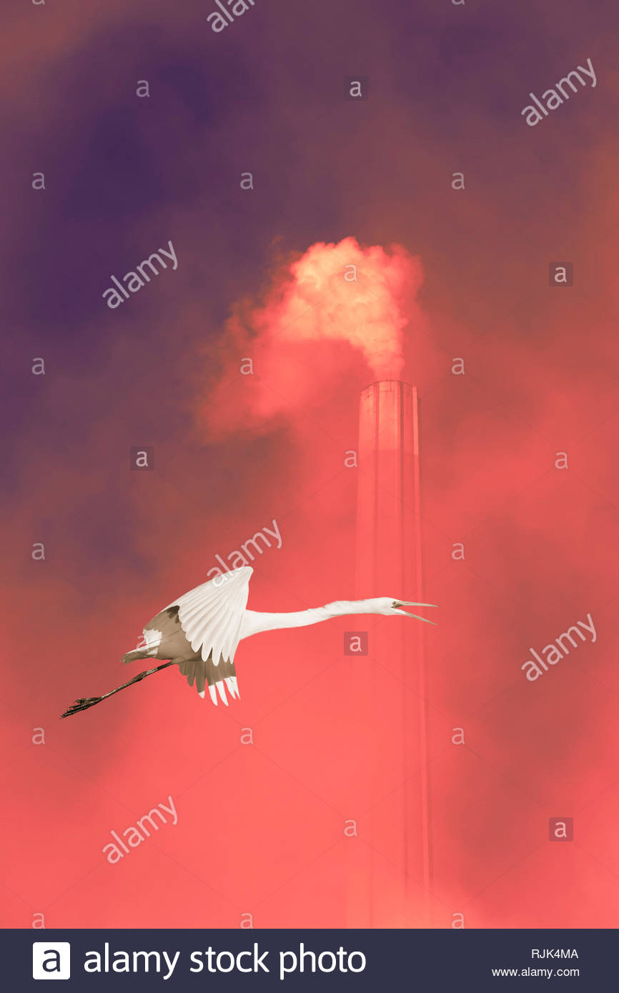 Global warming climate change anthropocene white egret bird flying past chimney smoke greenhouse gas. - Stock Image