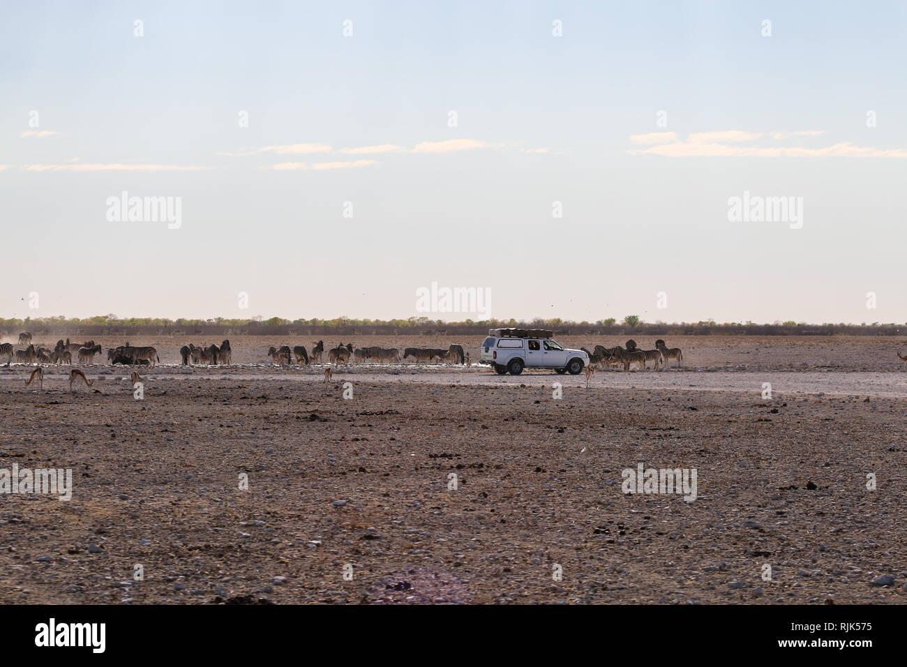 Touristen an einem Wasserloch in Namibia Stock Photo
