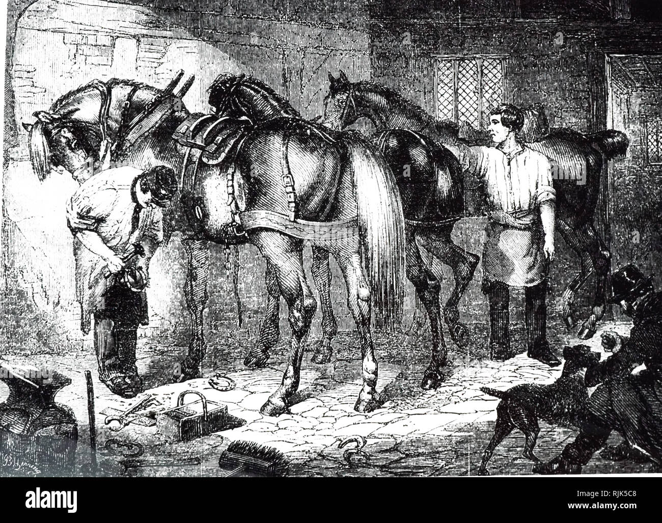 An engraving depicting the process of roughing the horses' shoes for the frosty weather. Dated 19th century - Stock Image
