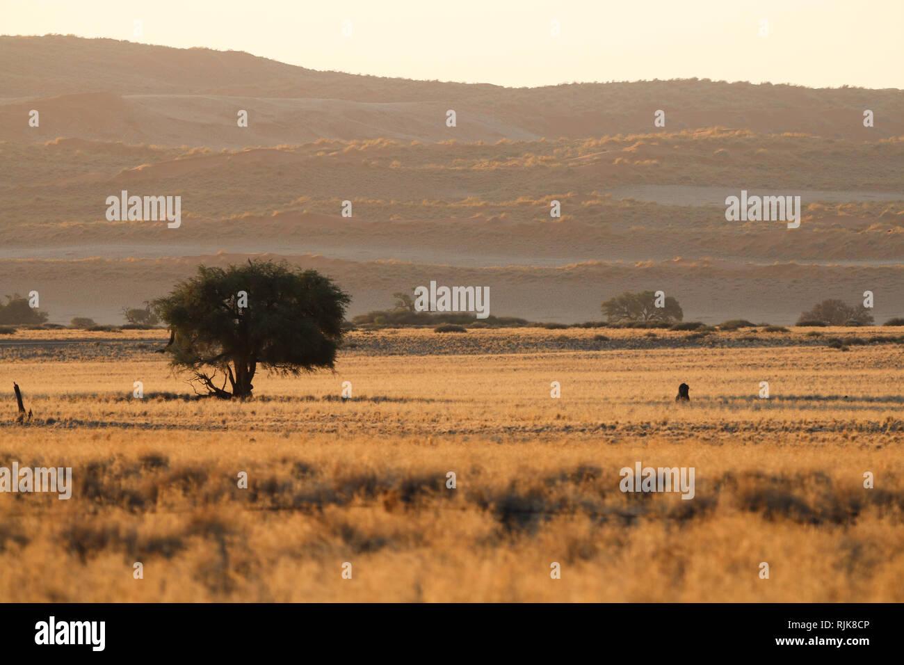 Aussicht vom Campingplatz in der Namib Stock Photo