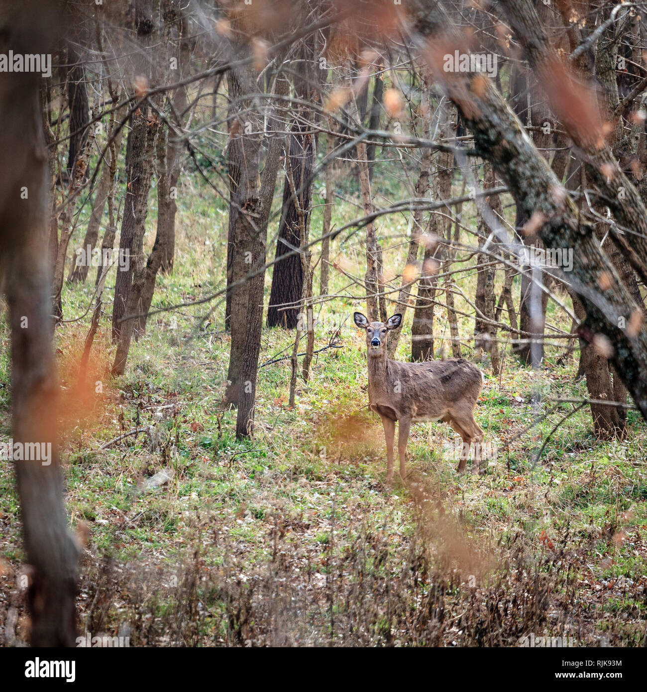 Deer Hunting And America Stock Photos Amp Deer Hunting And
