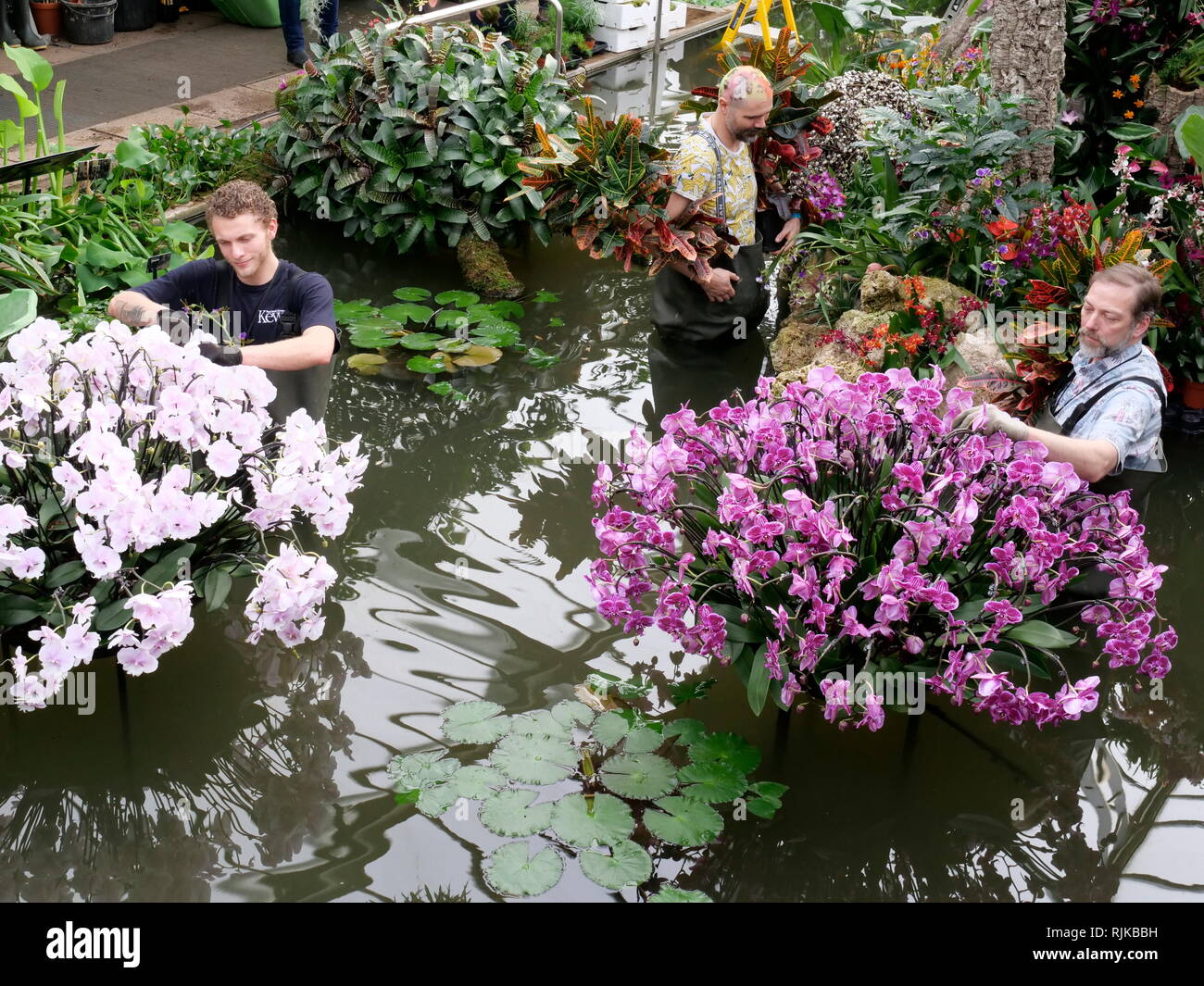Kew Gardens London, UK. 6th Feb, 2019. Gardeners prepare for the Orchid Festival starting on February 9 Credit: Anthony Collins/Alamy Live News Stock Photo