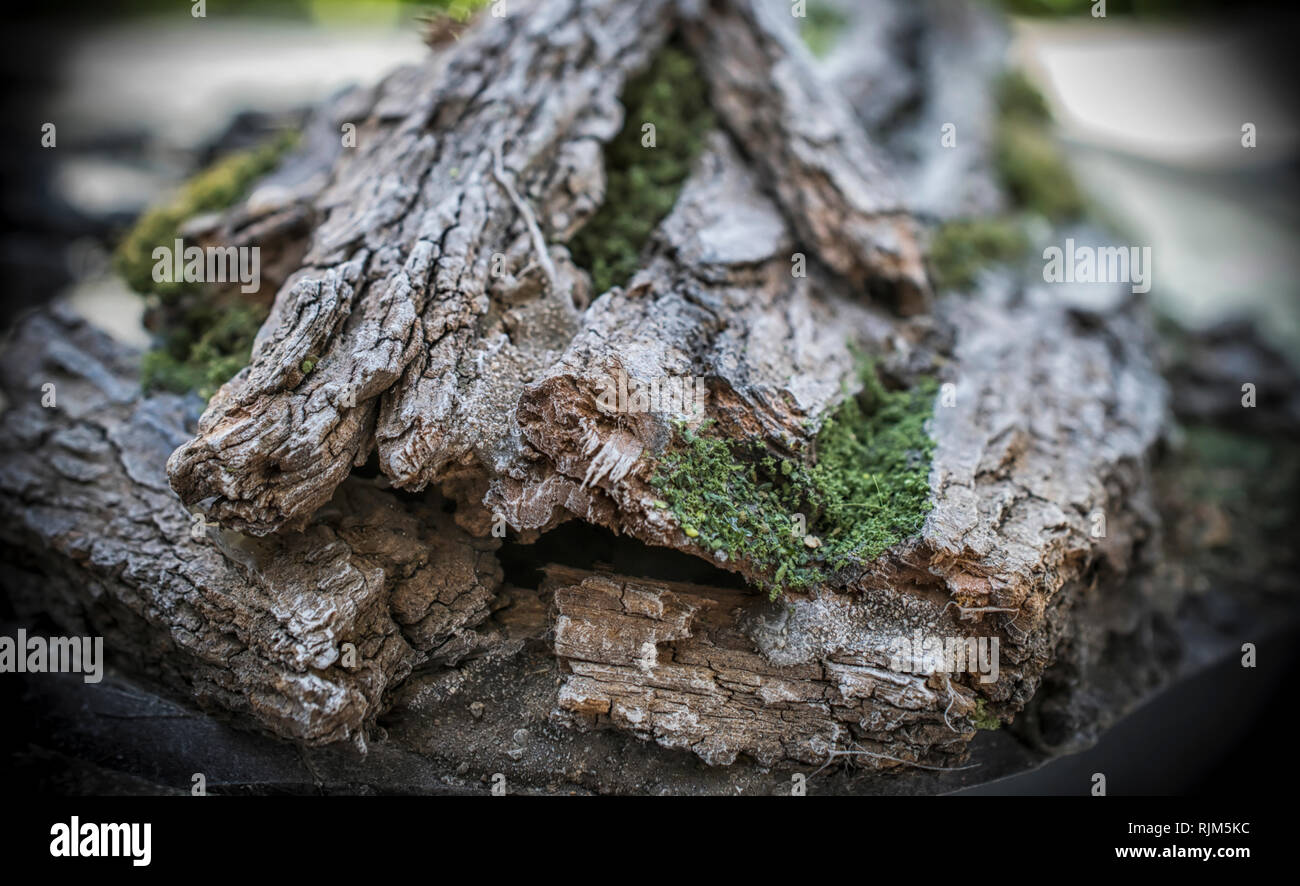 Painted tree bark as a part of scenery for a tabletop gaming