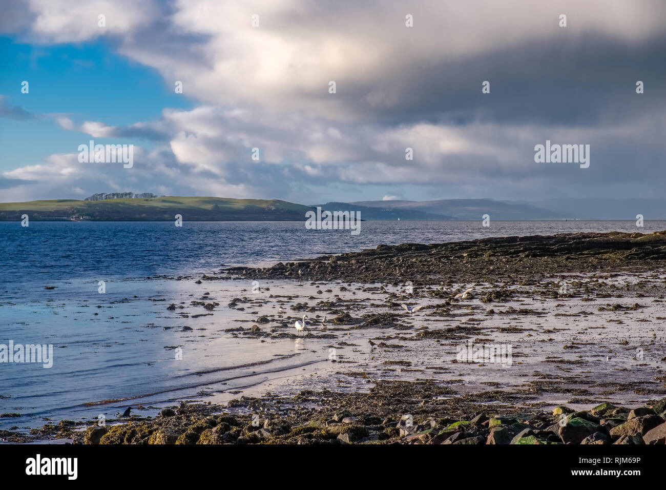 Largs Seaweed covered foreshore looking over to Cumbrae and Millport - Stock Image